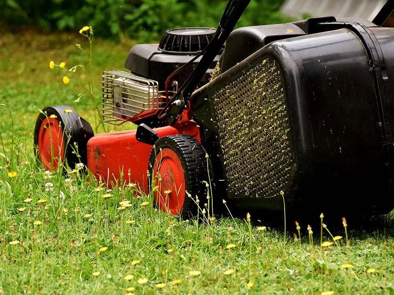 Lawn Pest Control Companies Spanish Fork UT